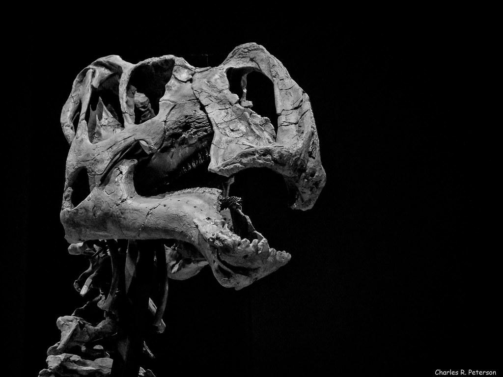 Dinosaur Exhibit Natural History Museum Los Angeles