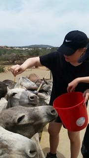 Sarah feeding donkeys at placement.