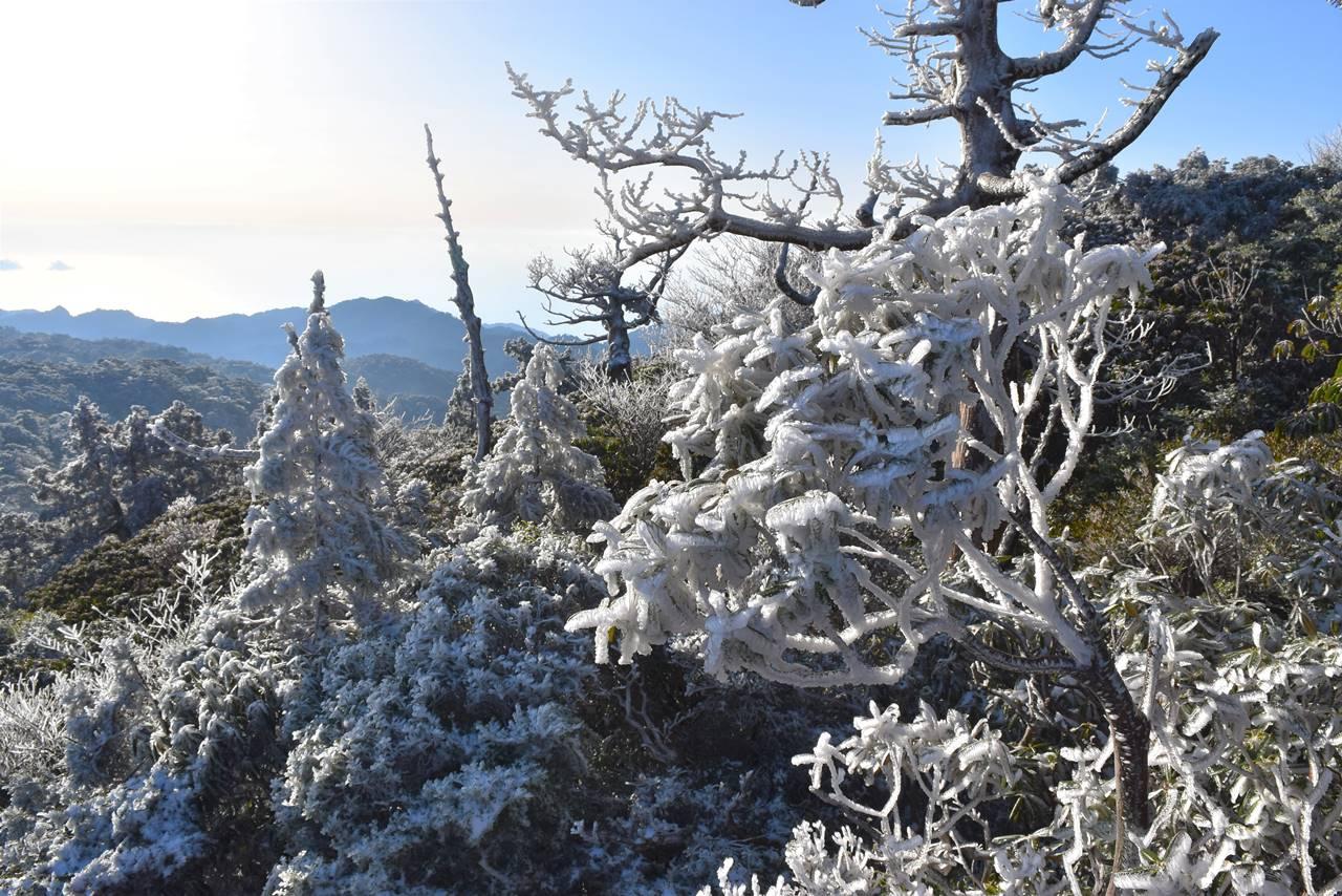 宮之浦岳の樹氷(霧氷)