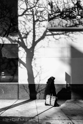 Shadow of a tree | by The Lazy Photographr