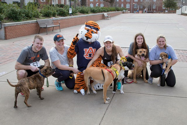 Students and dogs pose for a picture with Aubie.