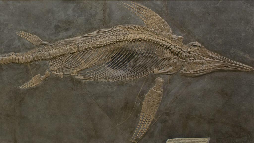 An Ichthyosaur