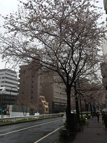 桜 2018.3