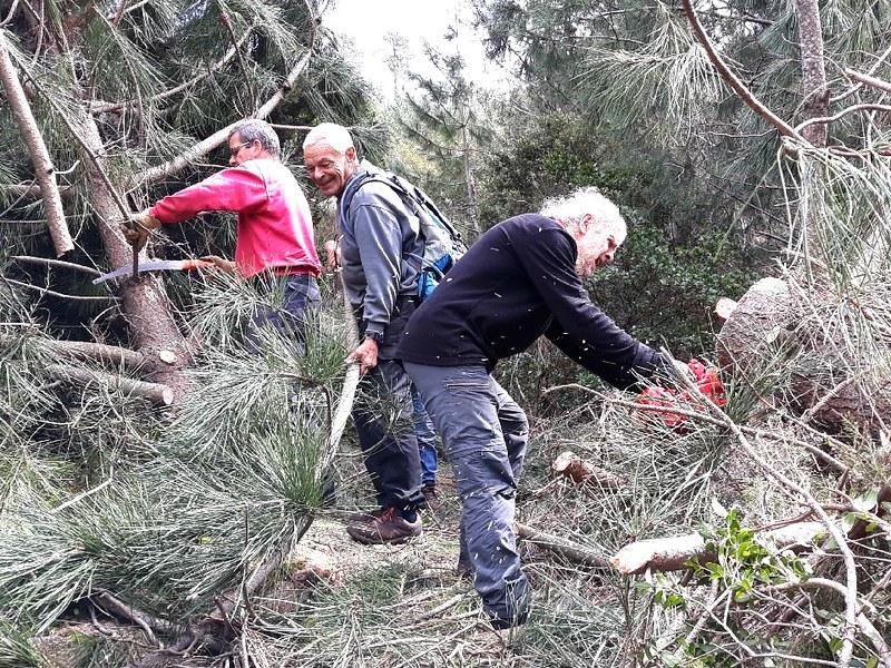 Tronçonnage des pins tombés dans la montée de Piscia Cava