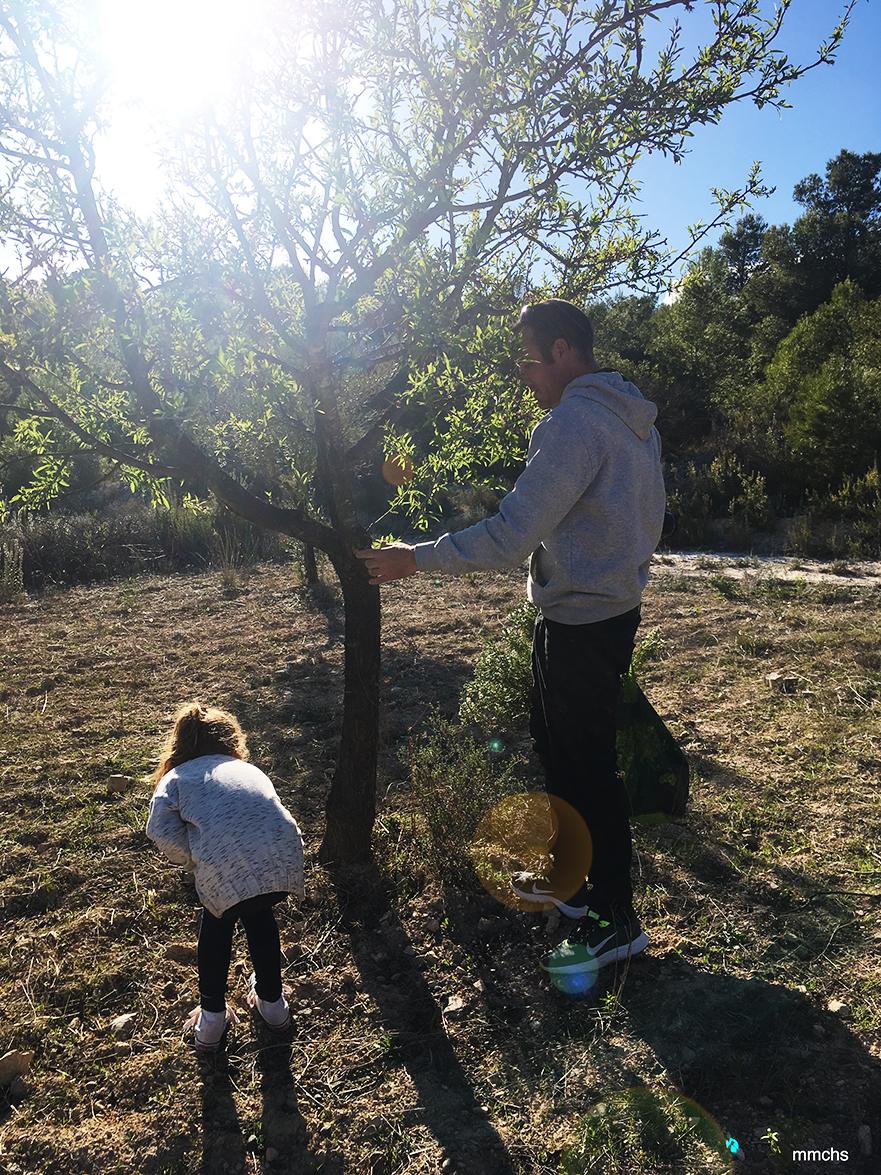 padre e hija cogiendo almendras