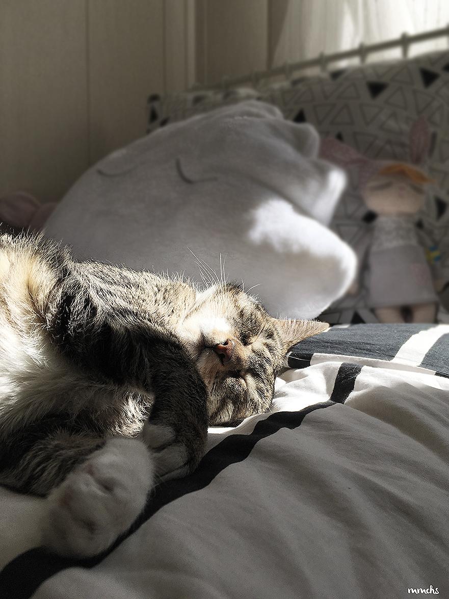gato durmiendo en cama infantil