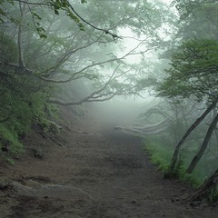 Suicide Forest, Aokigahara, Japan, 2008 | by Simon Vahala