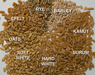 Wheat Berries (and some close relatives) | by debunix