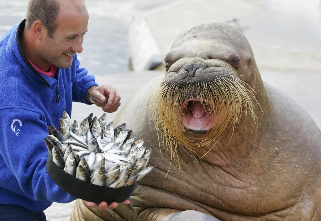 Картинки по запросу картинки день моржа