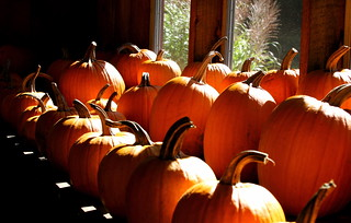 indoor pumpkins | by Muffet