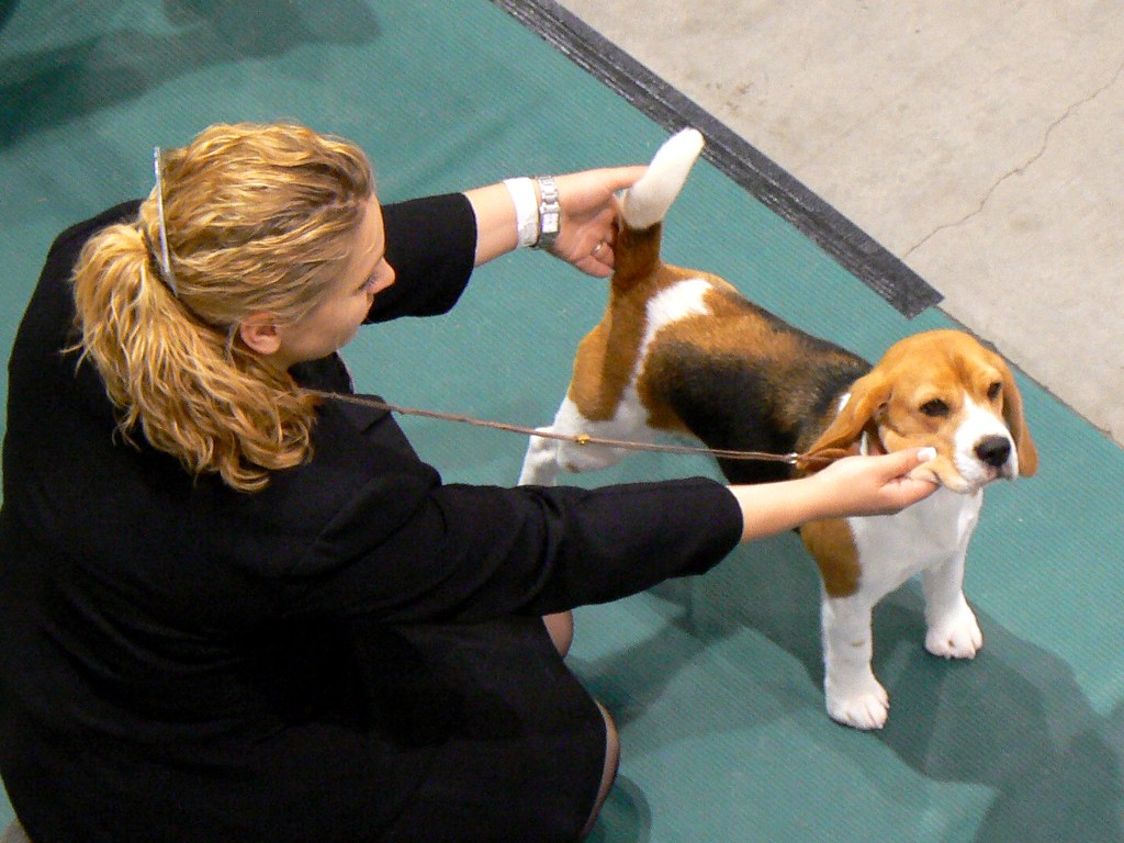 Seattle Dog Kennel Show