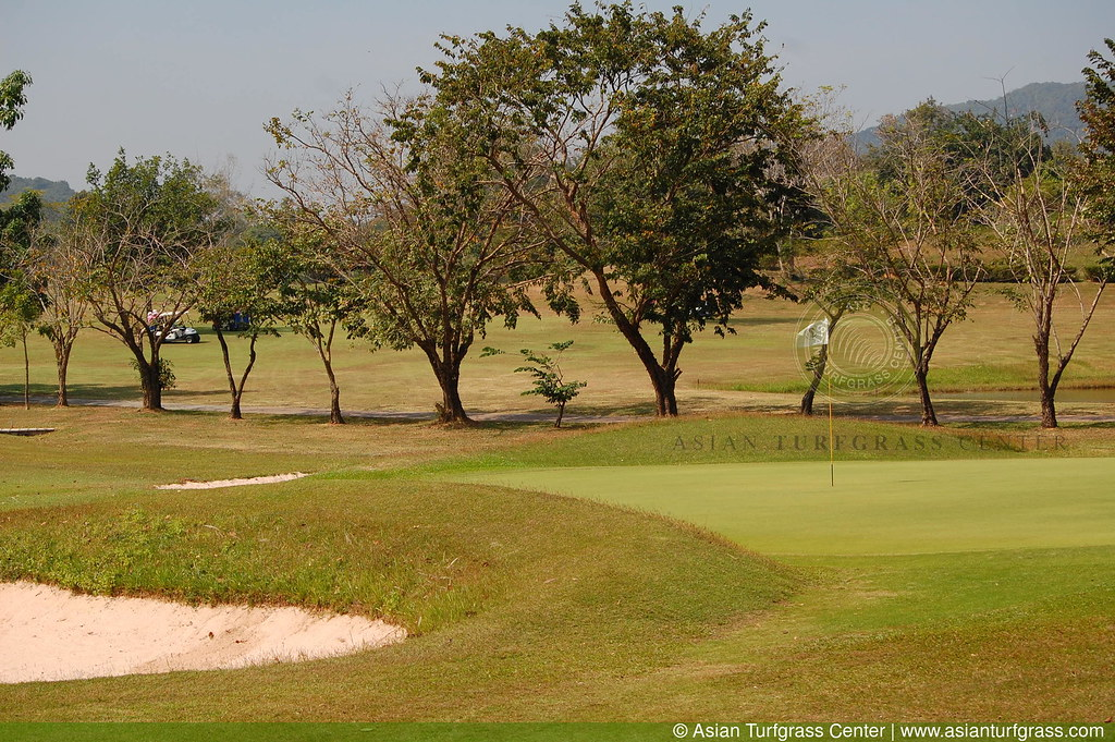 javagrass at the Plutaluang Navy Golf Course in Thailand