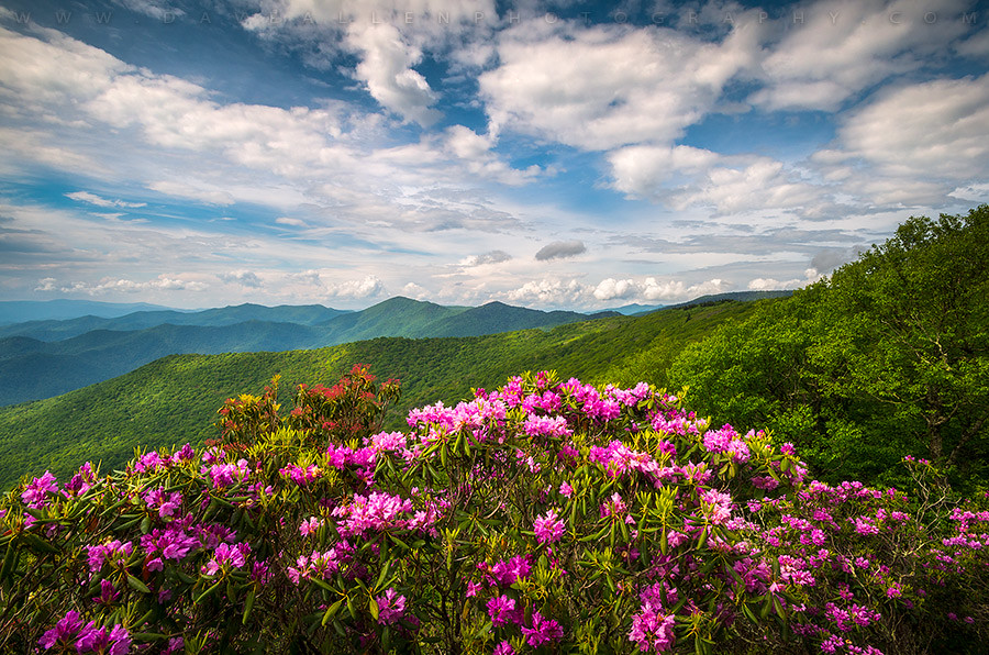 North carolina spring flowers mountain landscape blue ridg flickr north carolina spring flowers mountain landscape blue ridge parkway asheville nc by dave allen photography mightylinksfo