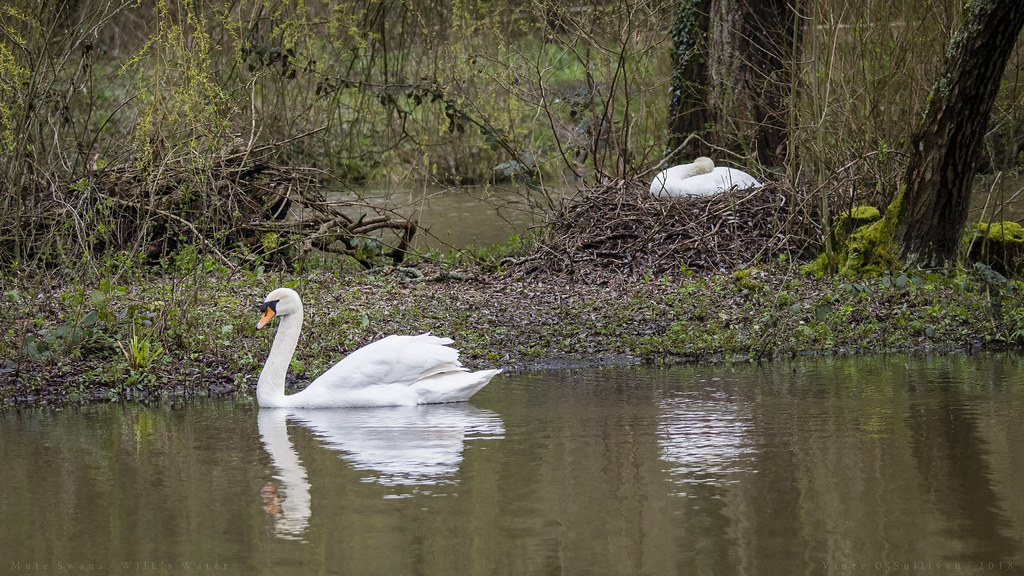 What Makes Swans Down Cake Flour Different From Regular Flour
