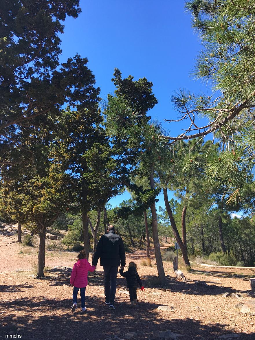 pinada de la sierra Calderona