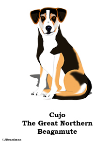 Cujo the Great Northern Beagamute ©JBoardman