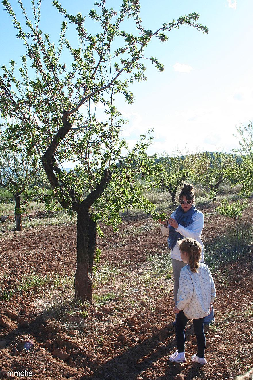campo de almendros con niños