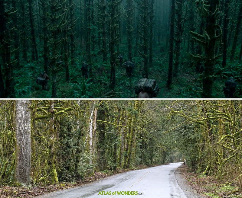 Forest and trees with actors and road