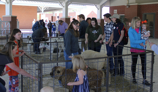 A petting zoo at the Auburn University College of Veterinary Medicine's Open House.