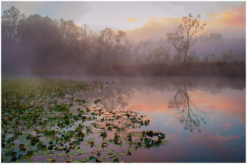 06 - Beaver Marsh Dawn by Harry Hitzeman | by Nature Camera Club