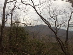 Black or Springer Mountain