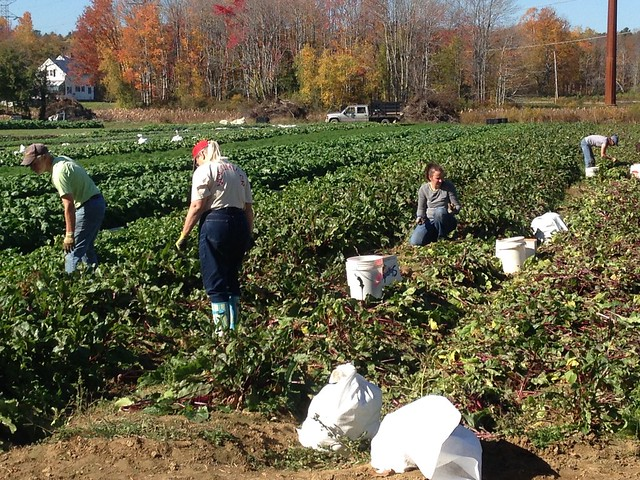 People gleaning