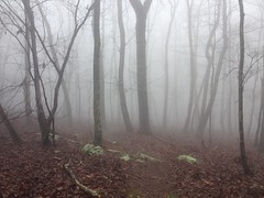 Spooky Haunted Forest
