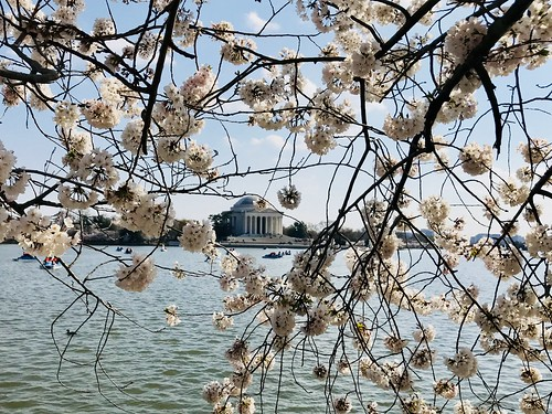 Jefferson Memorial with cherry blossoms | by Joe in DC