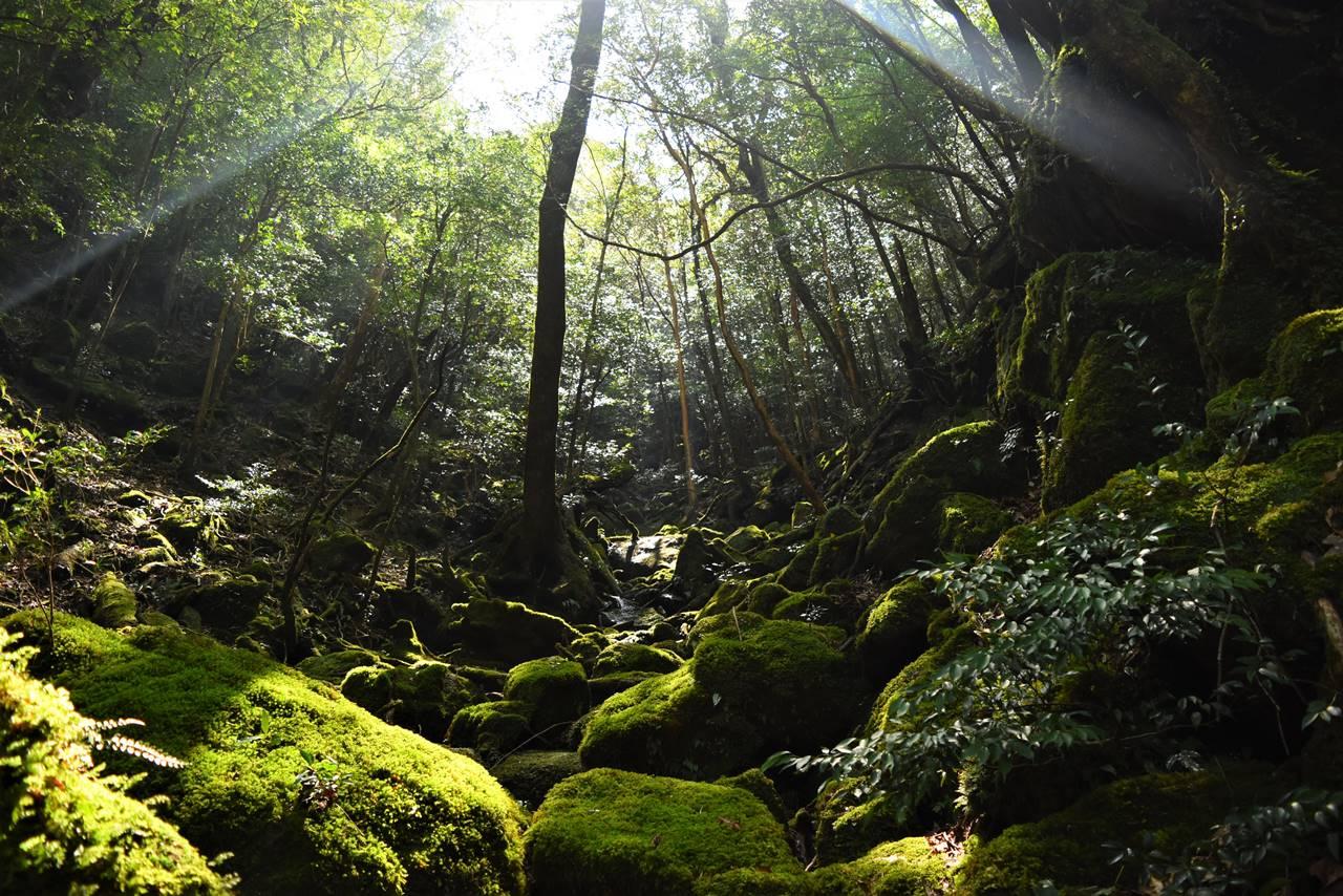屋久島・神秘的な苔むす森
