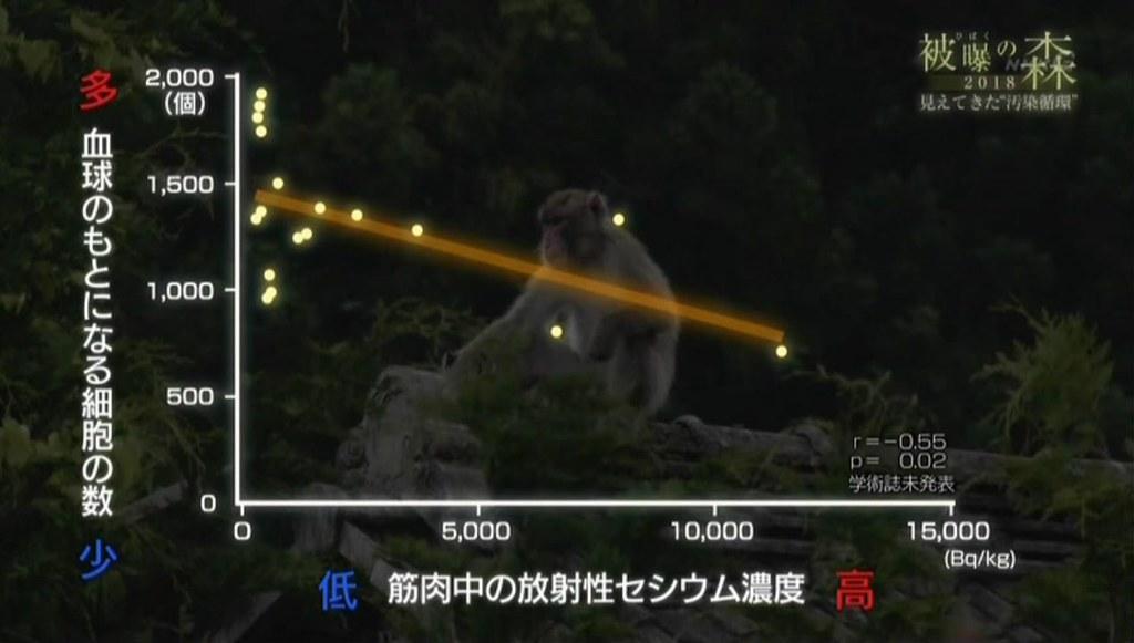 圖五:輻射被曝的日本獼猴,被曝量越高,造血幹細胞越少。