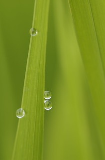 droplets | by kaycatt*