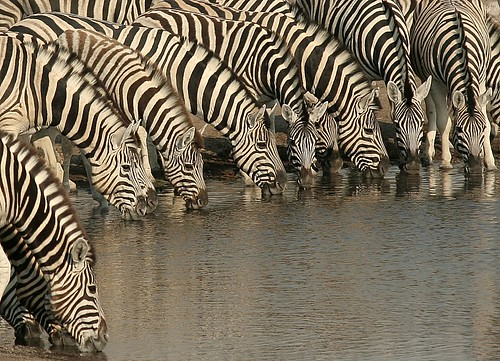 Stripe convention | by ..jmd..
