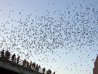 Urban bats take flight from the Congress street bridge in Austin, Texas | by shewhopaints