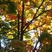 Leafy Canvas