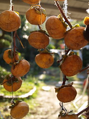 干し柿 dried persimmon | by bibipan