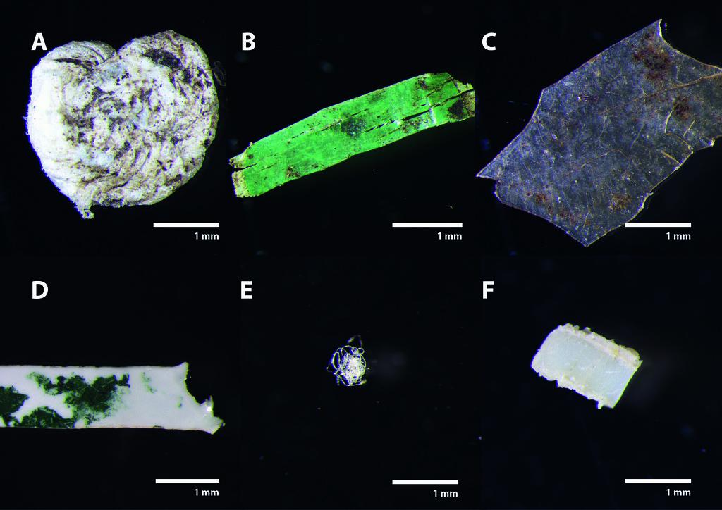微塑膠。圖片來源:Universität Bayreuth