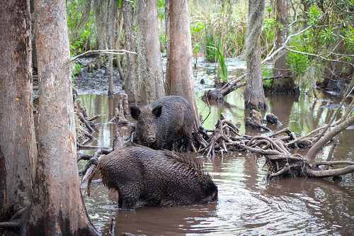 Swamp Tours Near New Orleans For Families On A Budget
