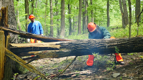 Photo of Work2Live WELL recruits using a chainsaw in tree management training class