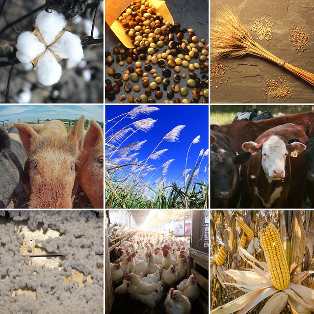 A collage of commodities featured in the WASDE report