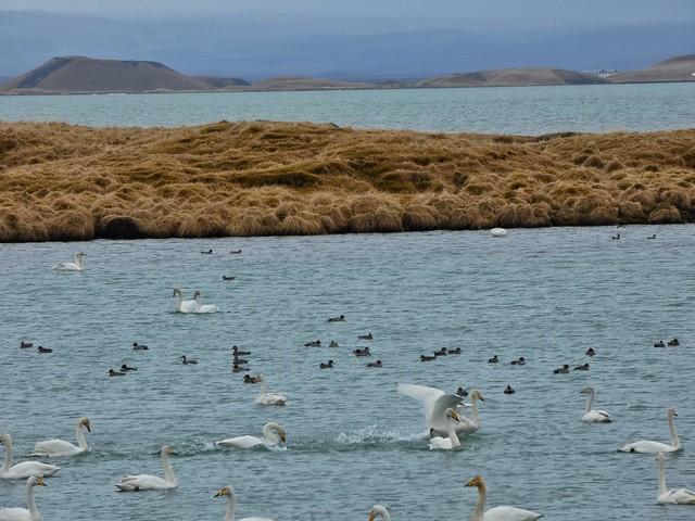 Lago Myvatn (Norte de Islandia)