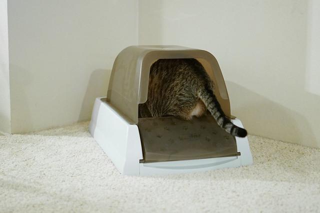 Cette litière semble trop petite par rapport à la taille du chat.