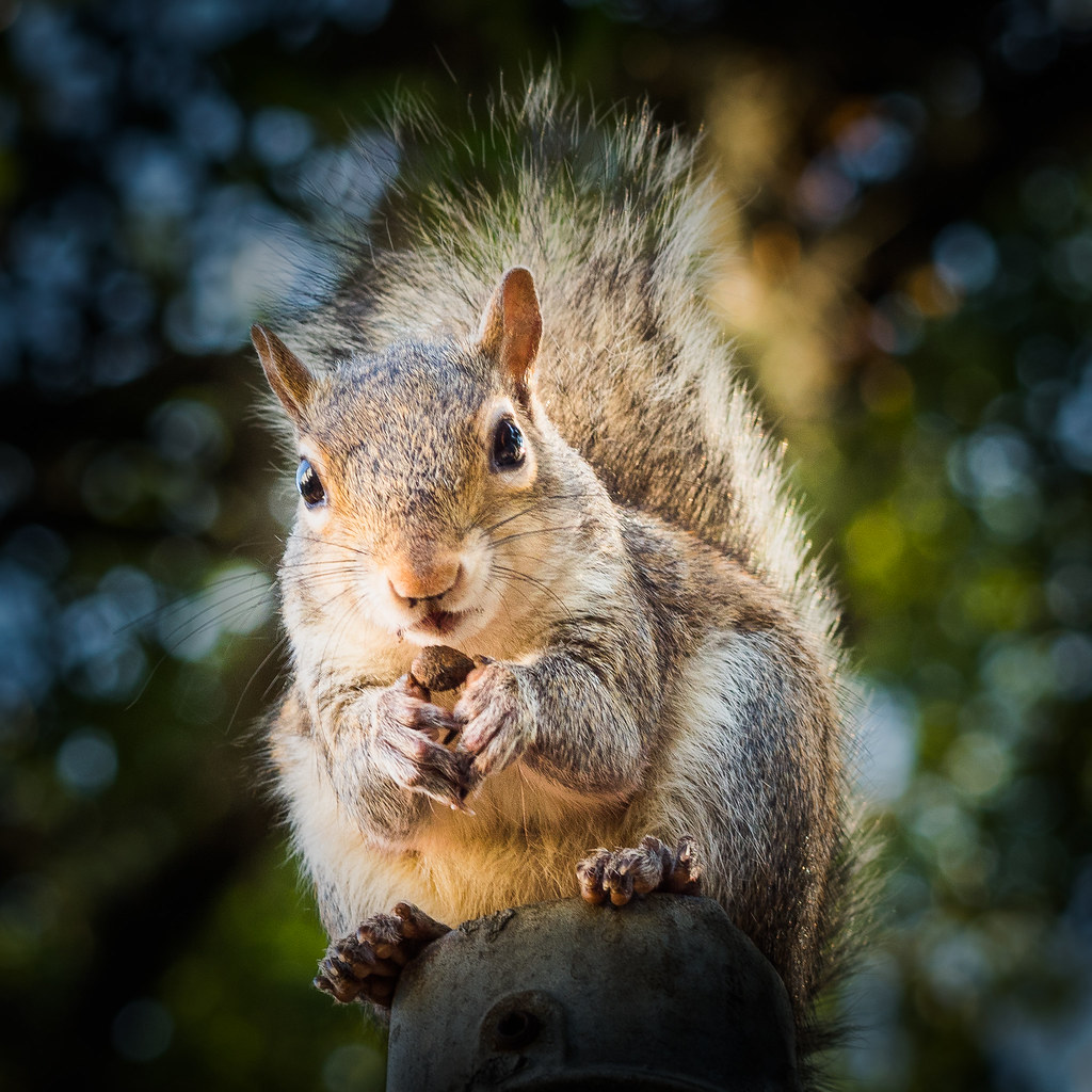 Squirral with nut.jpg | Olympus digital camera | Flickr
