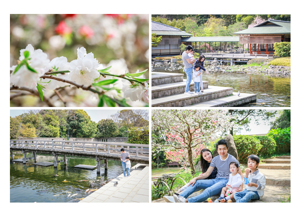 Japanese family photographer based in Nagoya, Aichi, Japan, shooting for client from Hong Kong with cherry blossom 櫻桃樹