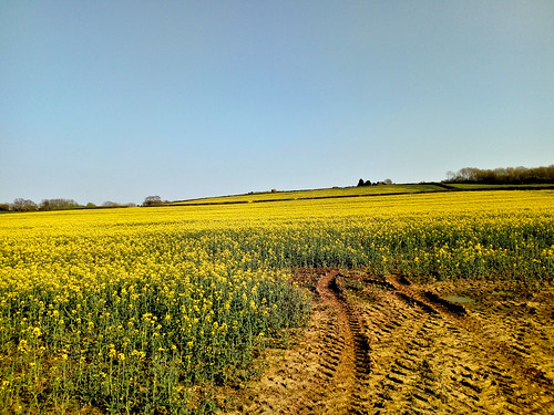 Colourful Rapeseed fields