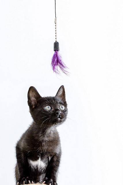 Bombón, gatita negra monísima y dulce esterilizada, nacida en Marzo´18 en adopción. Valencia. RESERVADA. 27337573727_d6c6da5a75_z