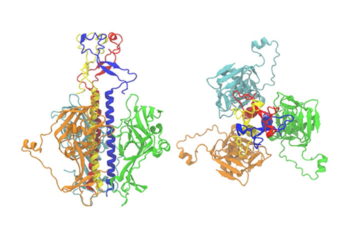 Side view, left, and top view of the Ebola Virus fusion end-state in a molecular dynamics computer model.