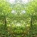 Les portes de mère nature