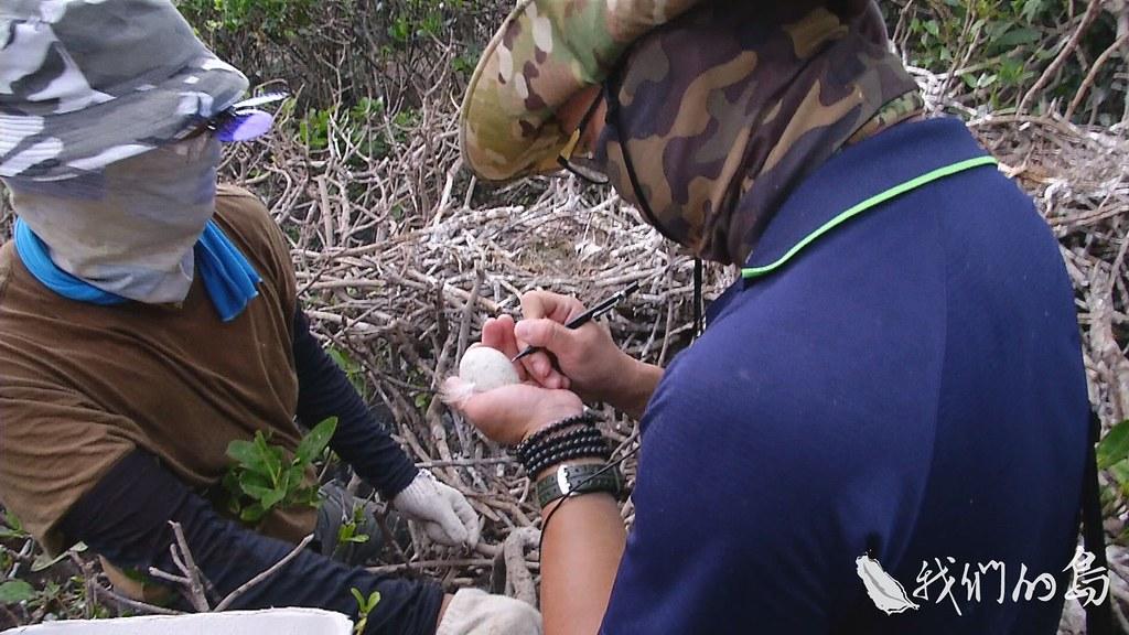 954-1-6S中華鳥會合作的清大團隊,收集鳥蛋,並架設紅外線自動照相機,觀察鳥蛋取走後,親鳥的反應。