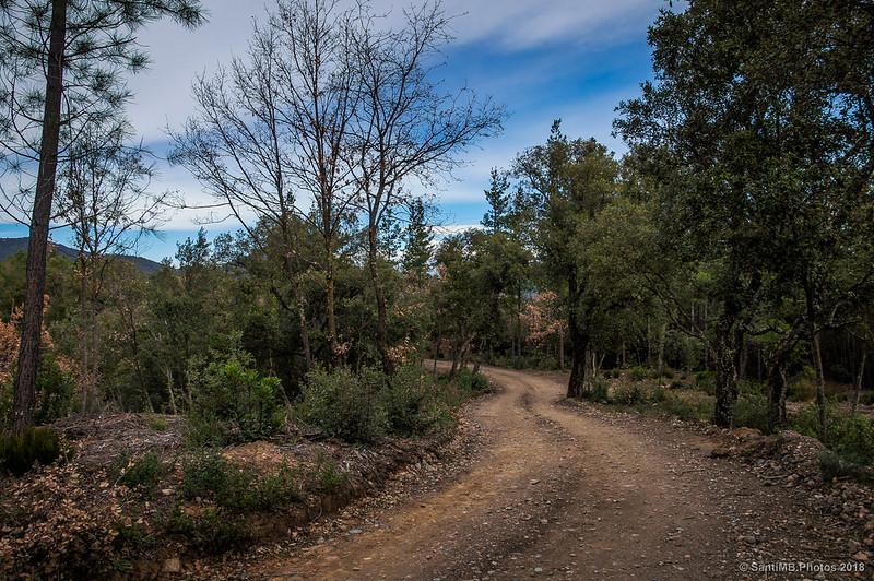 Entrando a Bosc de les Agudes