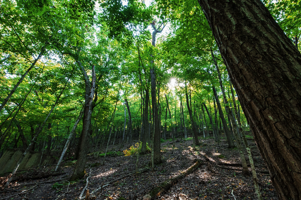 Forest at Whitewater State Park, Minnesota | Whitewater Stat